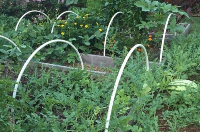 Mini-Hoop Houses in Garden