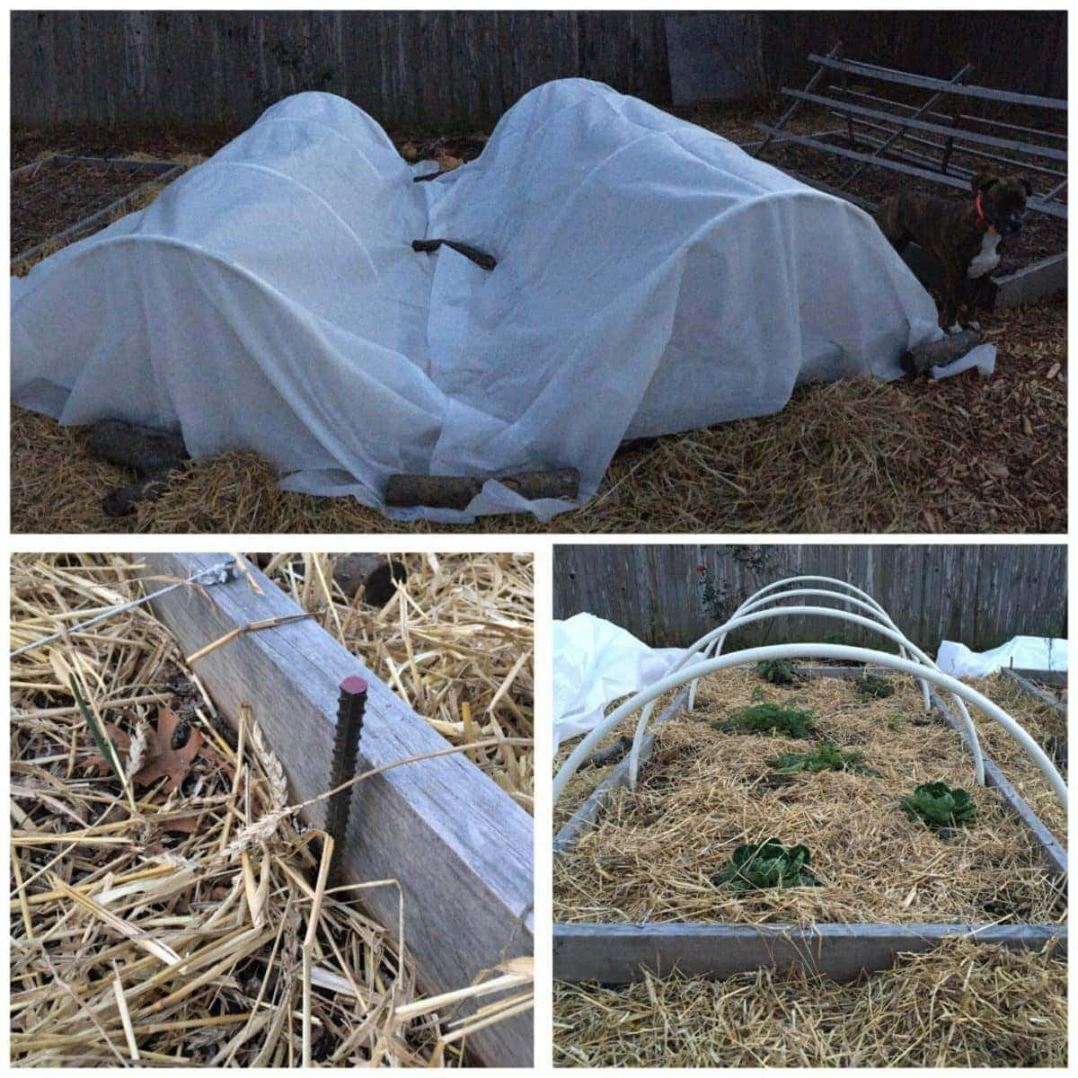 Rebar, PVC Pipe and Row-Cover for Winter Gardening