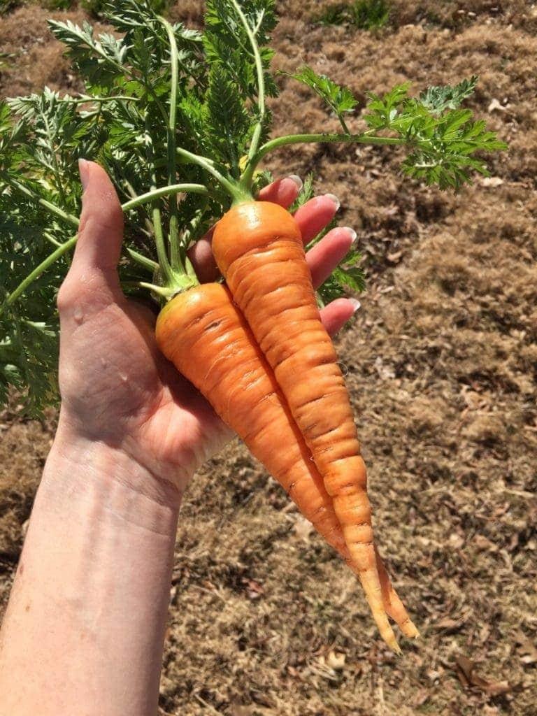 Increase Soil Fertility