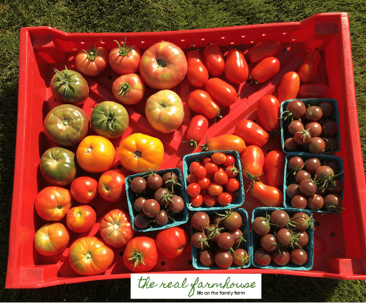 Colorful tomatoes from the Farmer's Wife.