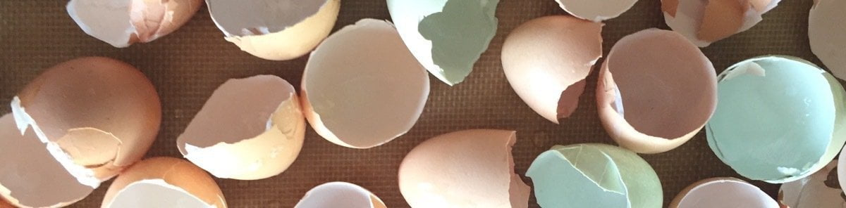 Broken Egg Shells on Cookie Sheet