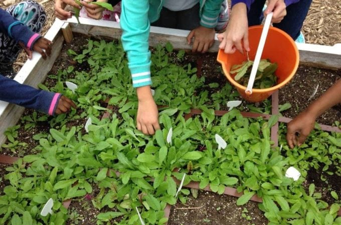 Ways to Garden with Kids (Without Going Insane)