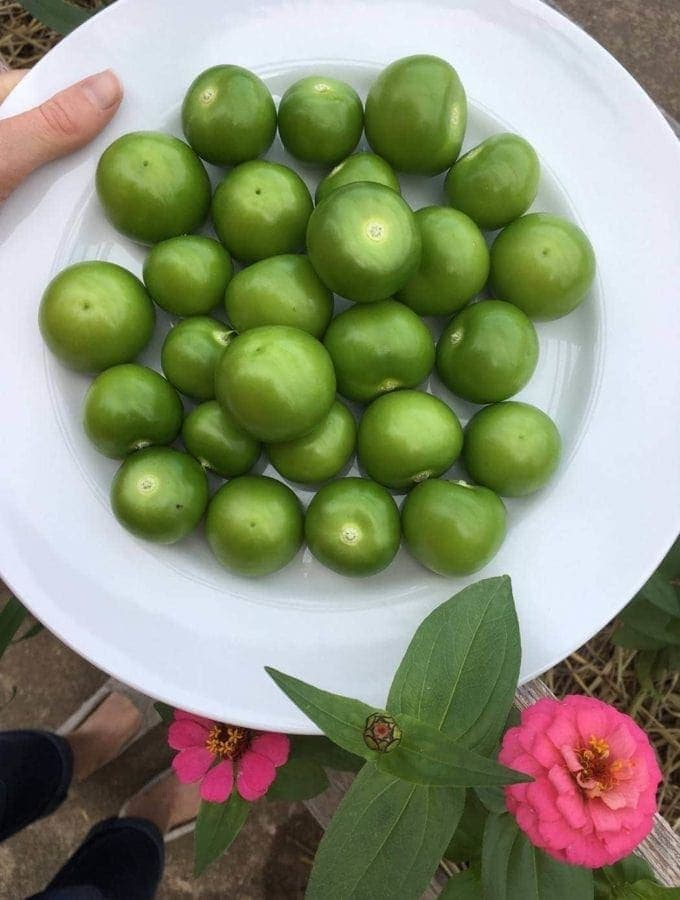Tomatillos and Zinnias