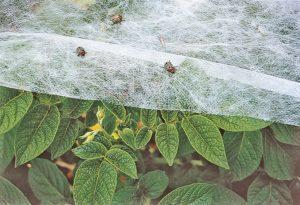 garden cloth or row cover