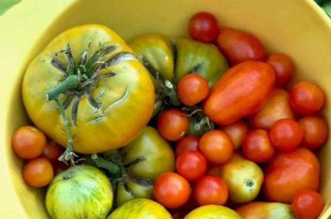 Make the Most of Your Growing Season