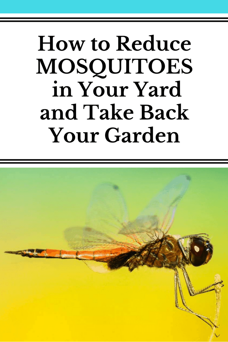 How To Control Mosquitoes In Your Backyard 28 Images