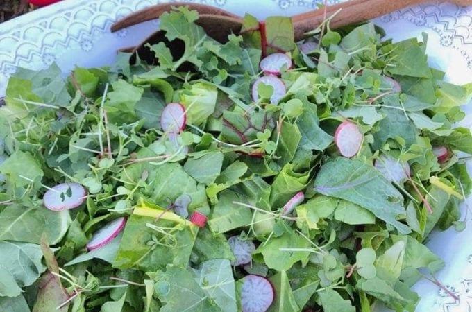 How Can I Grow a Garden Salad?
