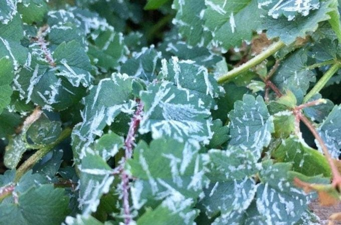 How to Prepare Your Garden for a Freeze